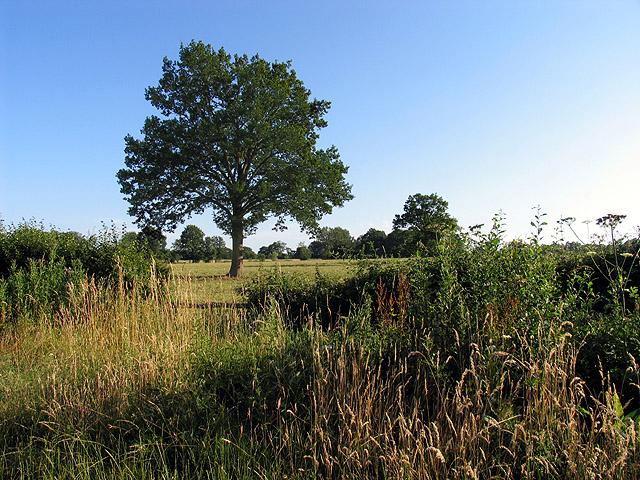 Farmland near Tadley