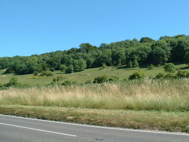 Clapham Wood