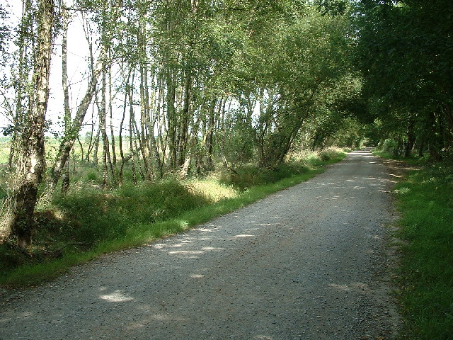 Newman's Lane, West Moors