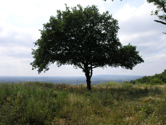 A Tree at the edge of the downs
