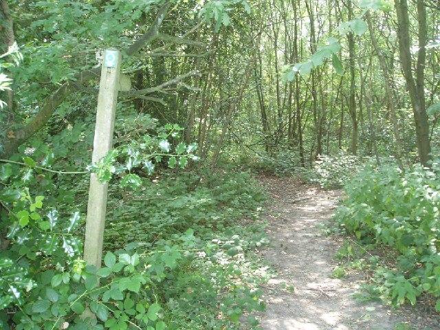 Sussex Border Path at Ketche's Lane