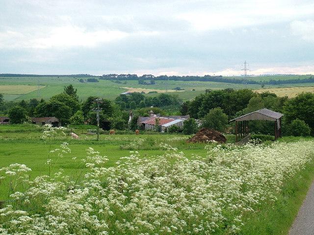 Tifty Farm