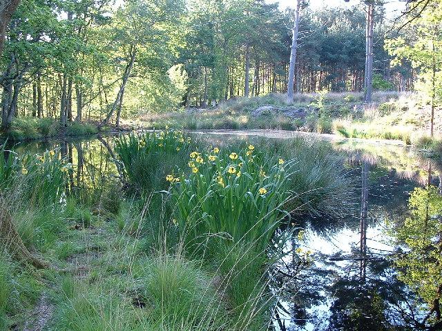 Heathland Pond near Pompey's Corner