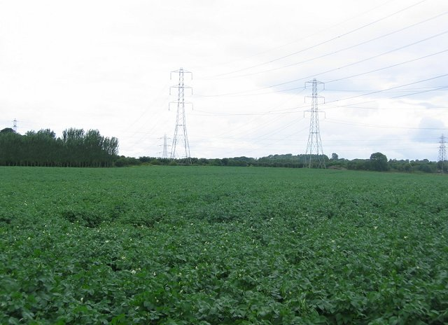 Potato fields , Sheriffhall.