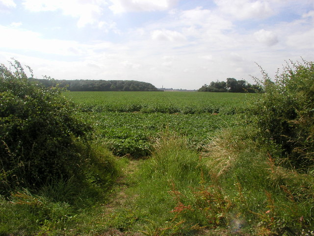 The view towards Patrington