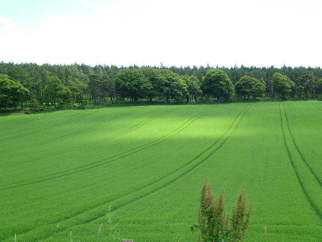 Farmland South of Pitbee