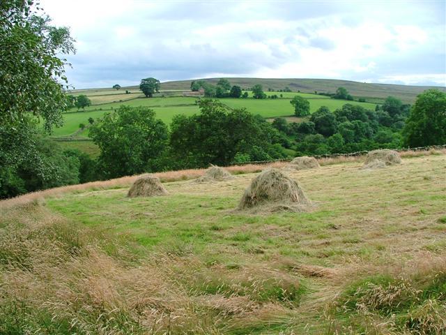 Stooks of Hay, Commondale