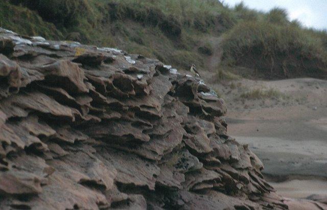 Weathered sandstone, Kilmory Beach