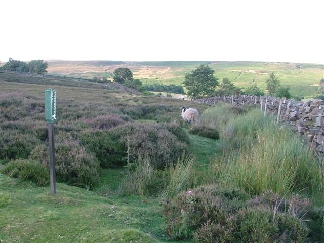 Footpath Following the Wall from the Commondale Road to Scale Cross Farm