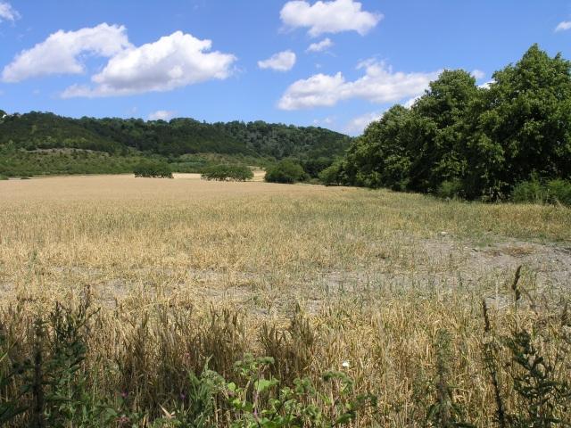 Rural Land near Buckland