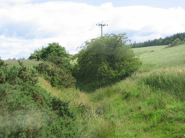 Overgrown burn, Shewington