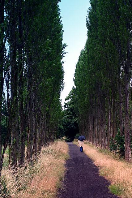 Fletcher Moss - the avenue