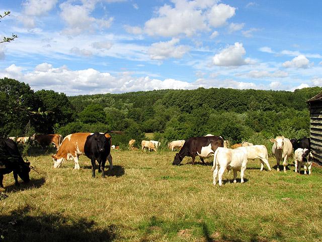 Dairy Farming near Bishop's Green