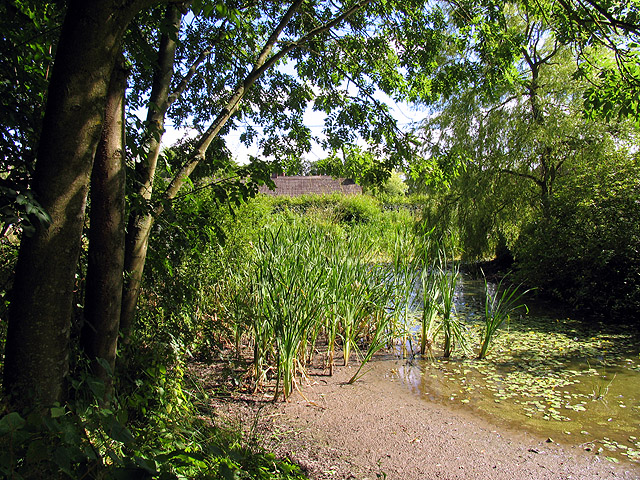 Ecchinswell Village Pond