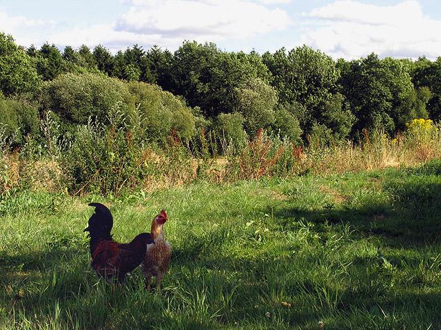 Farmland near Headley
