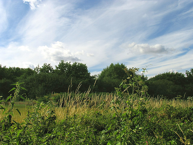 Field off Union Lane near Headley