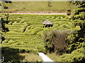 SW7727 : The Laurel Maze, Glendurgan by Bruce Hall