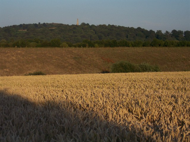 Wheat Field and Sitch Wood
