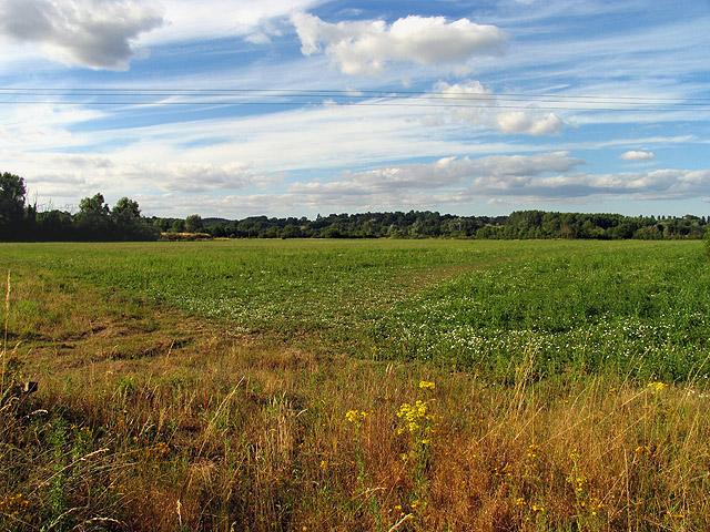 Farmland near Gravel Pits: Woolhampton