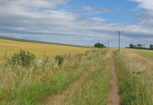 Farm track, Dirleton Hills.