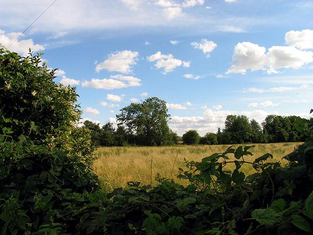 Farmland: Woolhampton