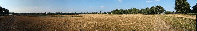 Acid Grassland near the Pen Ponds, Richmond Park