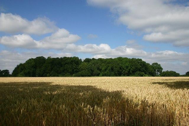Kiln Grove, Rushbrooke