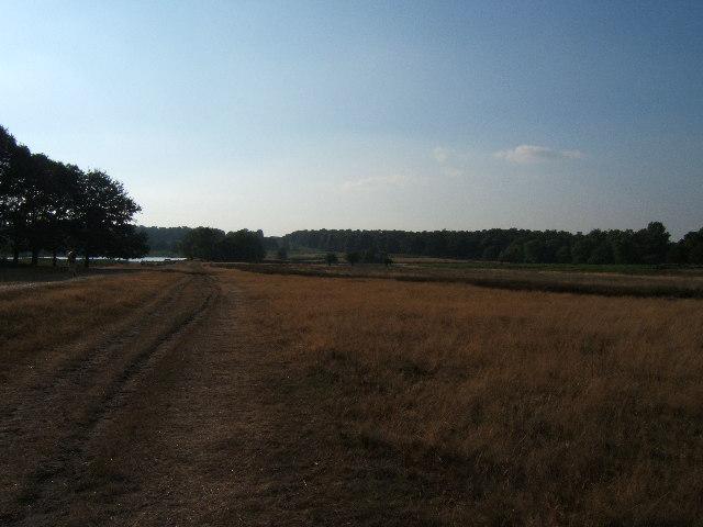 View towards the Pen Ponds, Richmond Park