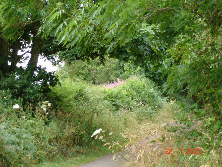 Footpath / Bridleway leading to St. Beuno's