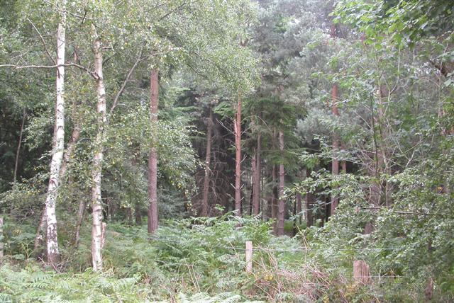 Bottomfield Copse