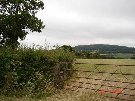Farmland near Waen