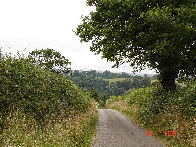 Fields and woods near Waen