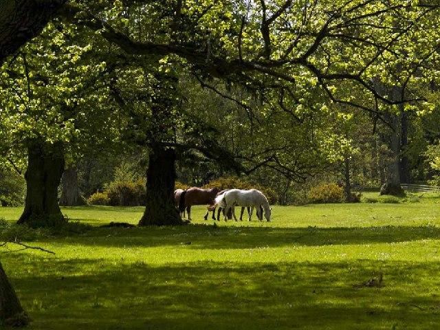Horses at Lilburn Tower