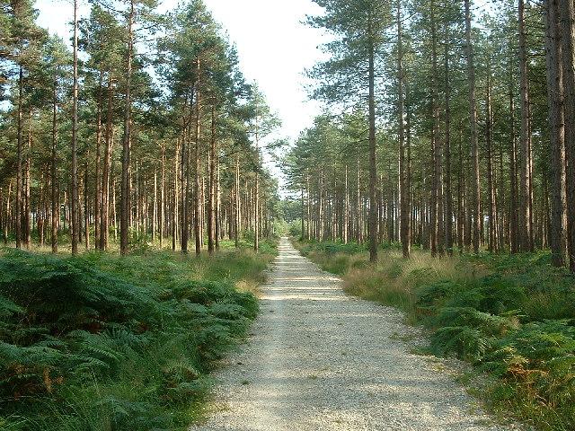 Castleman Trailway in Uddens Plantation