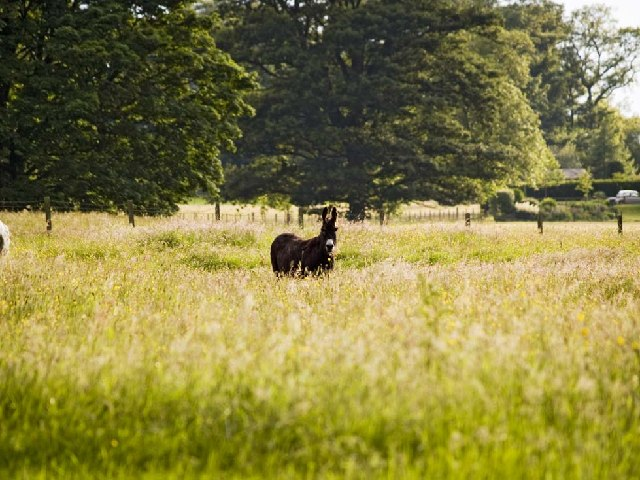Donkey in lush pasture at Bolam