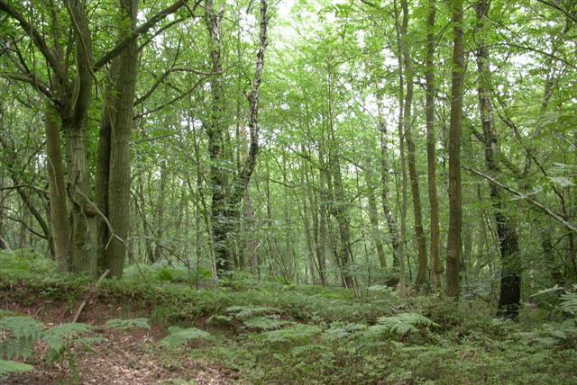 Edge of Ludshott Common