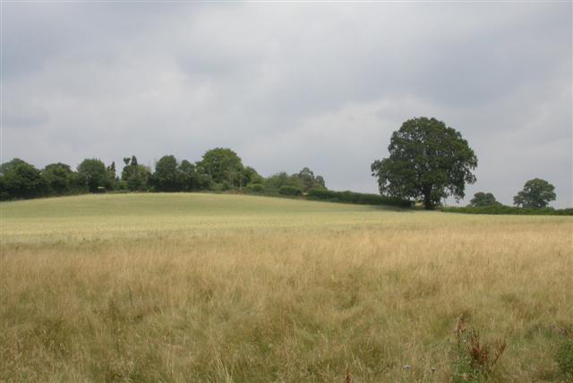 Conford Park Farm