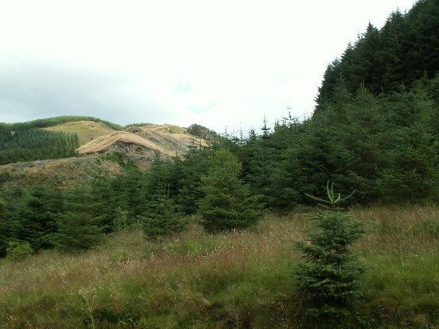 Forestry, Cyneiniog