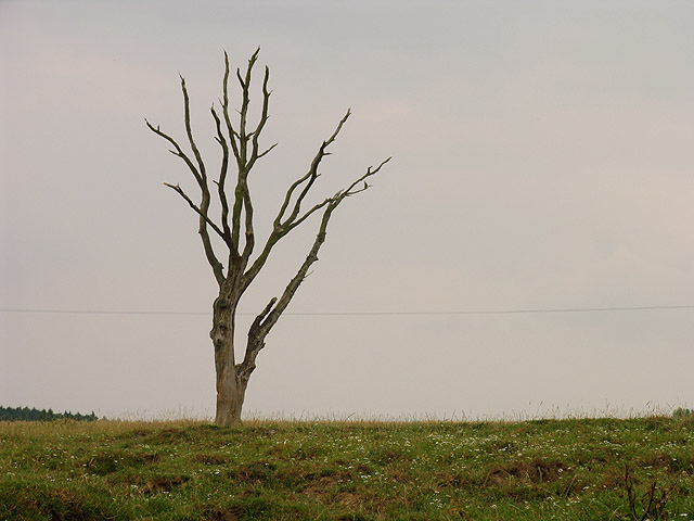 Tree on farmland near Headley