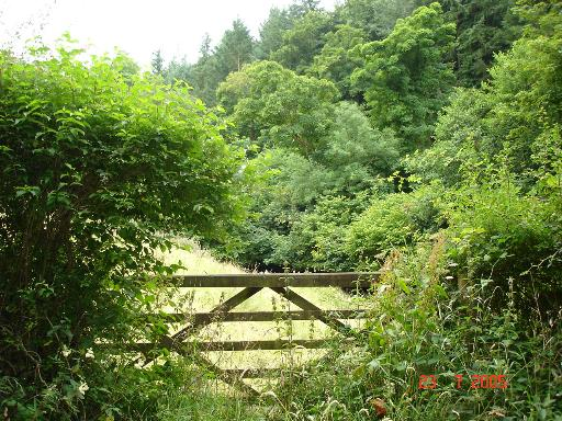 Gate and field to Afon Y Meirchion