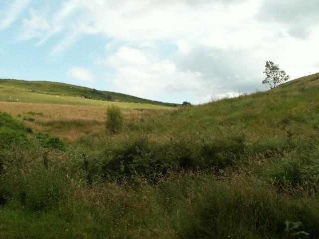 Hillside, Nant Llwyd