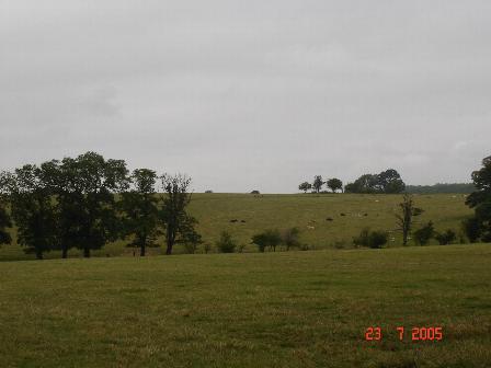 Rough pasture land near Henllan