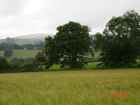 Pastureland near Cefn Meiriadog
