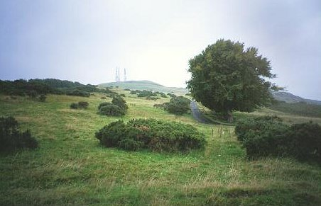 Brown Carrick Hill