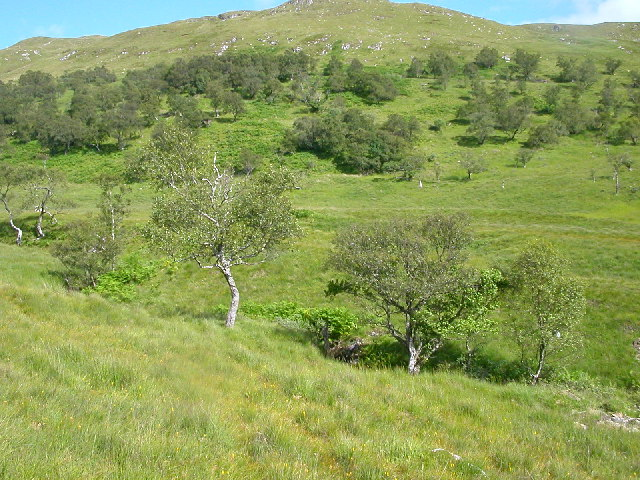 Wooded Hillside