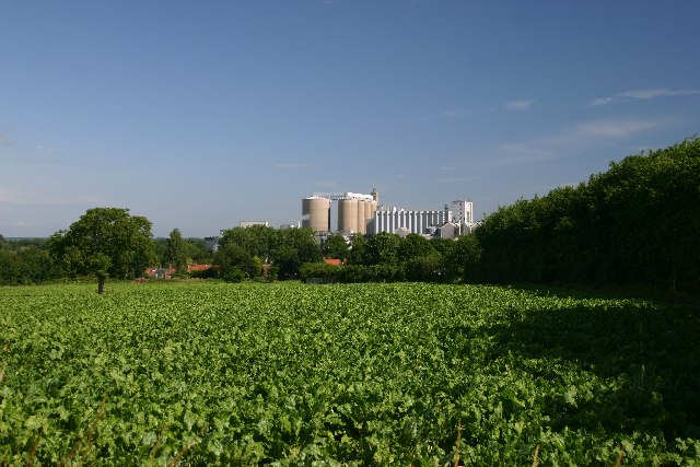 Sugar beet - field and factory