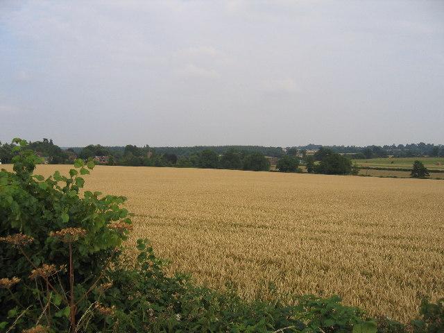 Wheatfield near Ashow