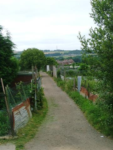 Track through Allotments, Langley Park