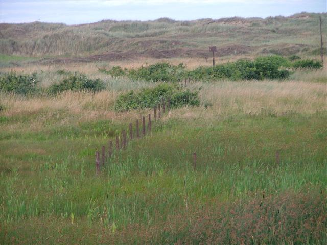 Ruined Fence Across Coatham Sand Dunes