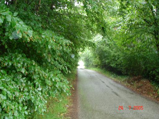 Tree cover lane at Dinorben